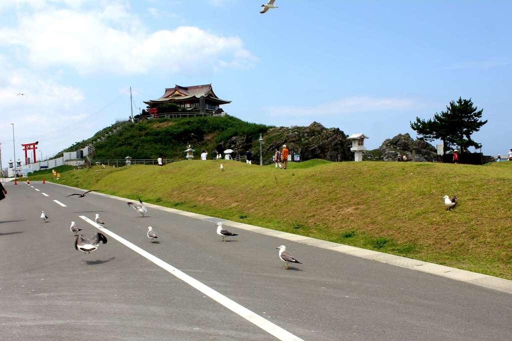 蕪嶋神社の動物