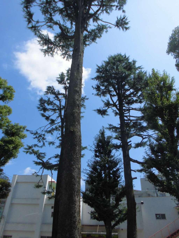 お三の宮日枝神社の自然