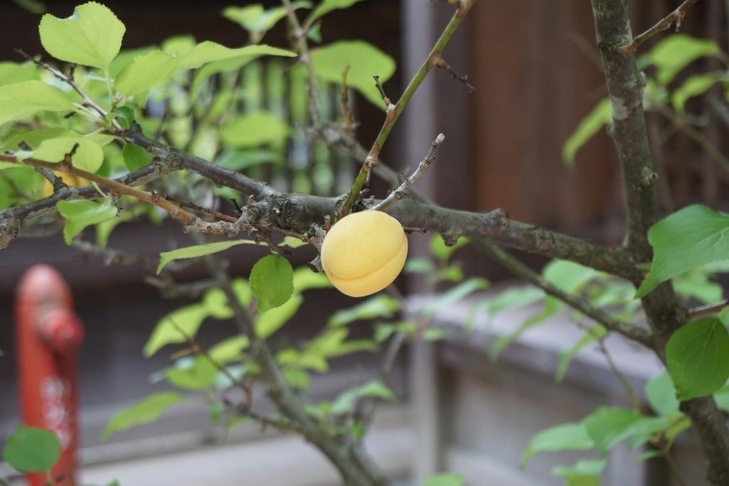 櫻山八幡宮の自然