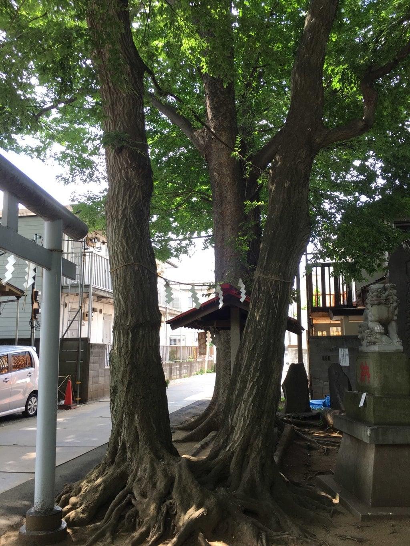 駒繋神社の自然