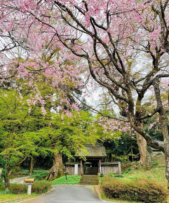 仏生寺の自然