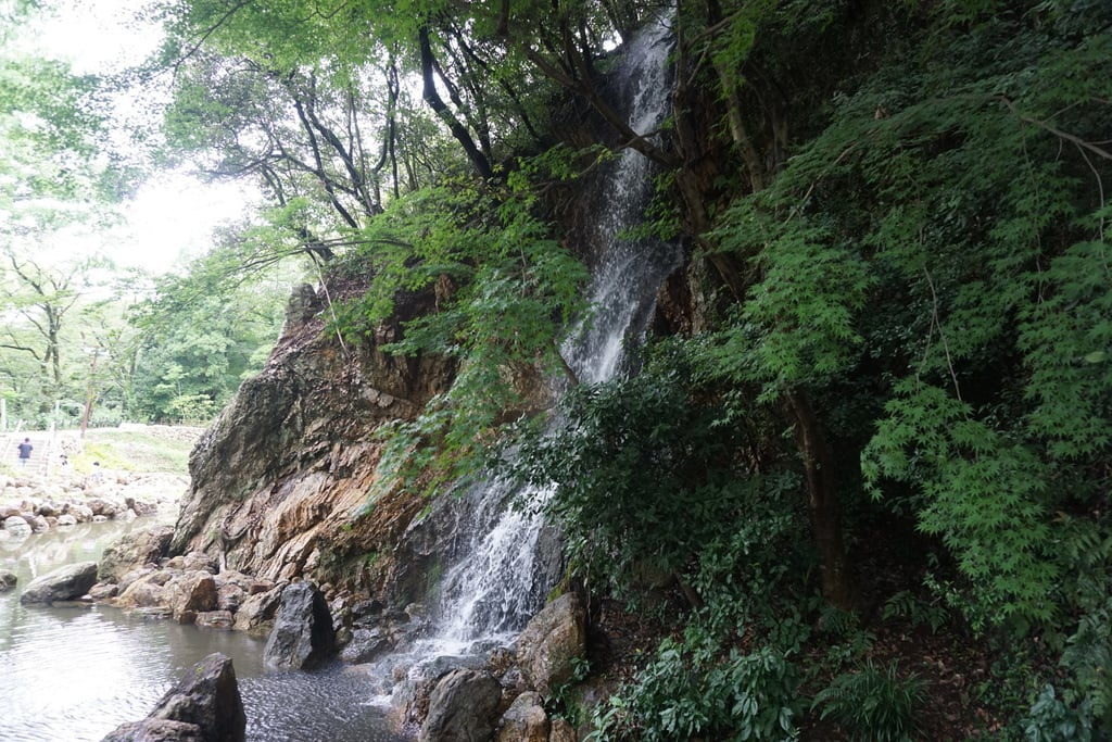 岐阜護国神社の自然