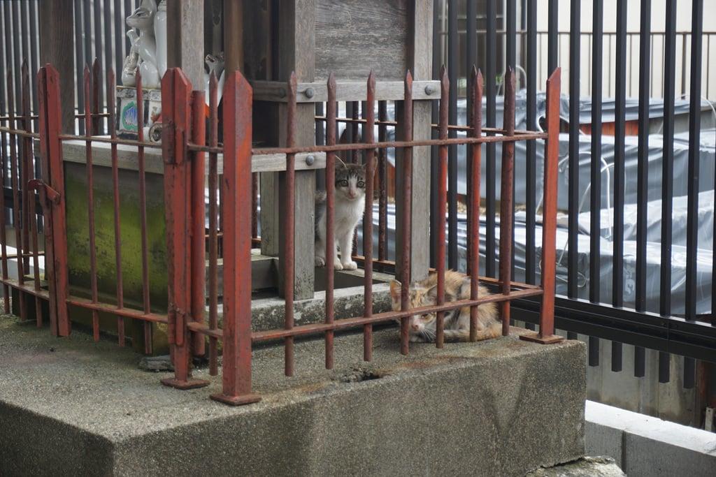 天王坊稲荷神社の動物