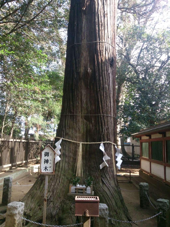 一言主神社の自然