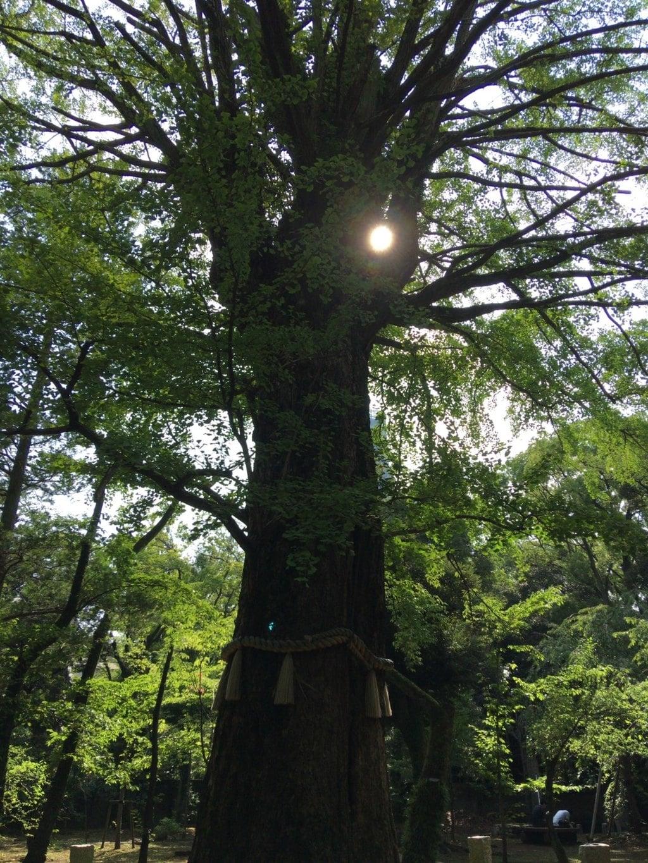 赤坂氷川神社の自然