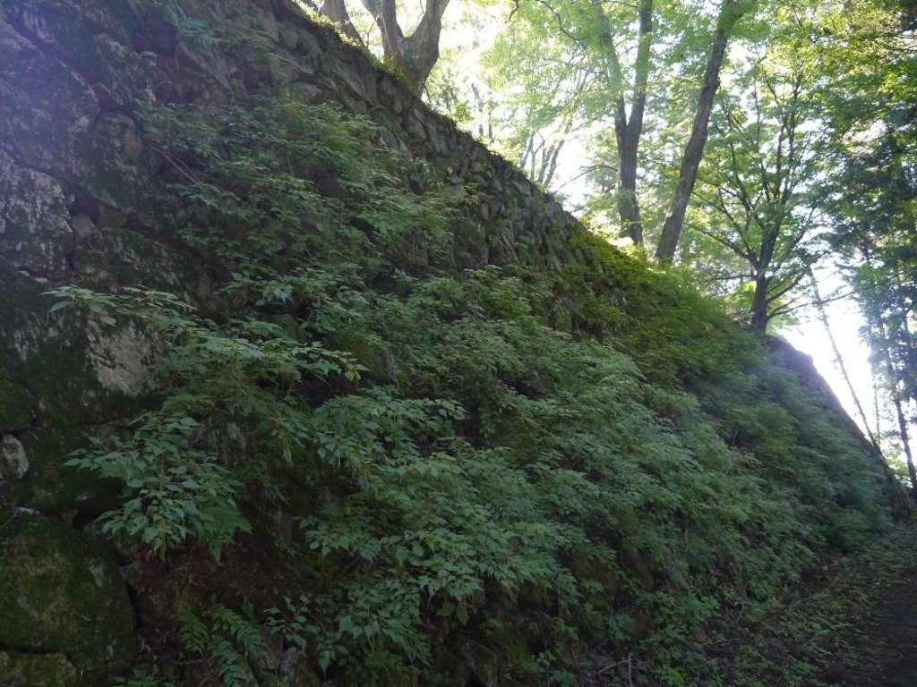 南法華寺(壷阪寺)の自然