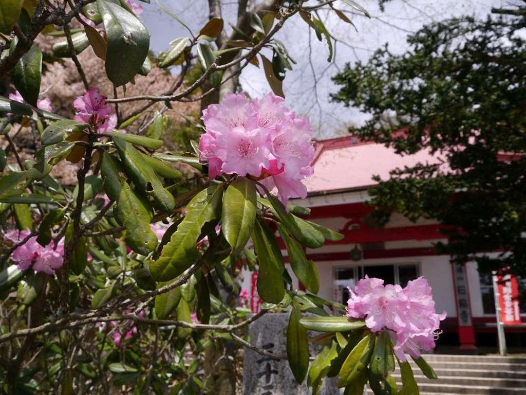 日輪寺の自然