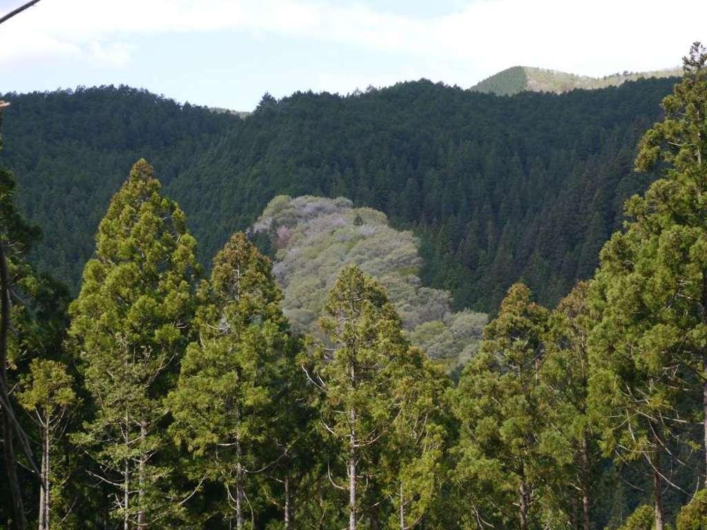 日輪寺の景色
