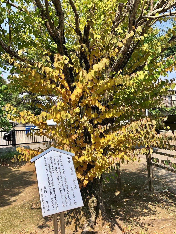 手児奈霊神堂の自然