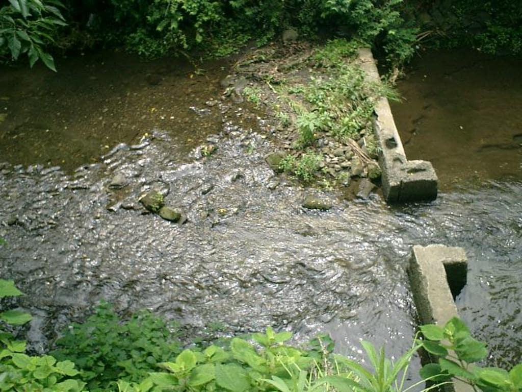 蛭子神社の自然