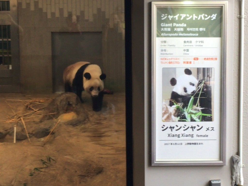 上野東照宮の動物