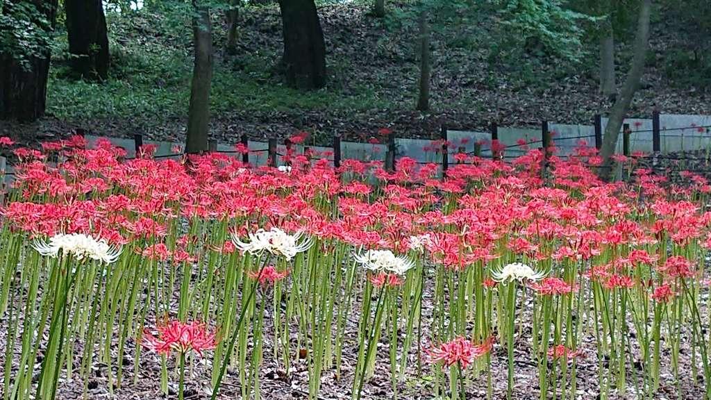 金剛寺(高幡不動尊)の庭園