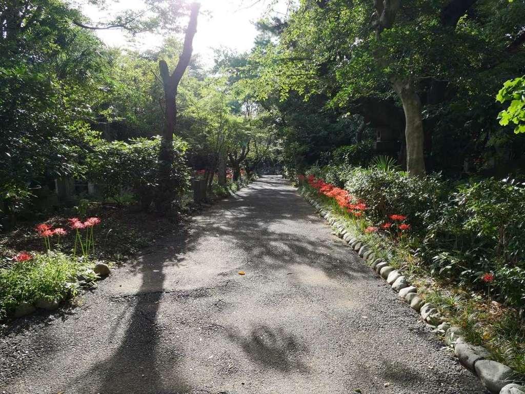 宝蔵院の庭園