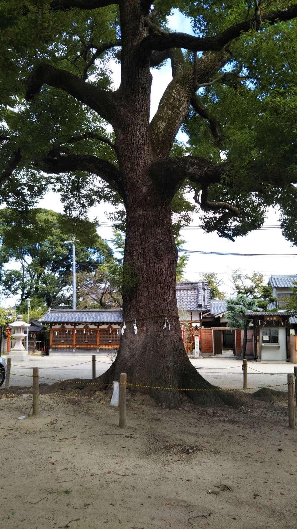 許麻神社の自然