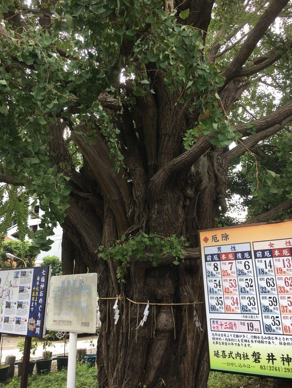 磐井神社の自然