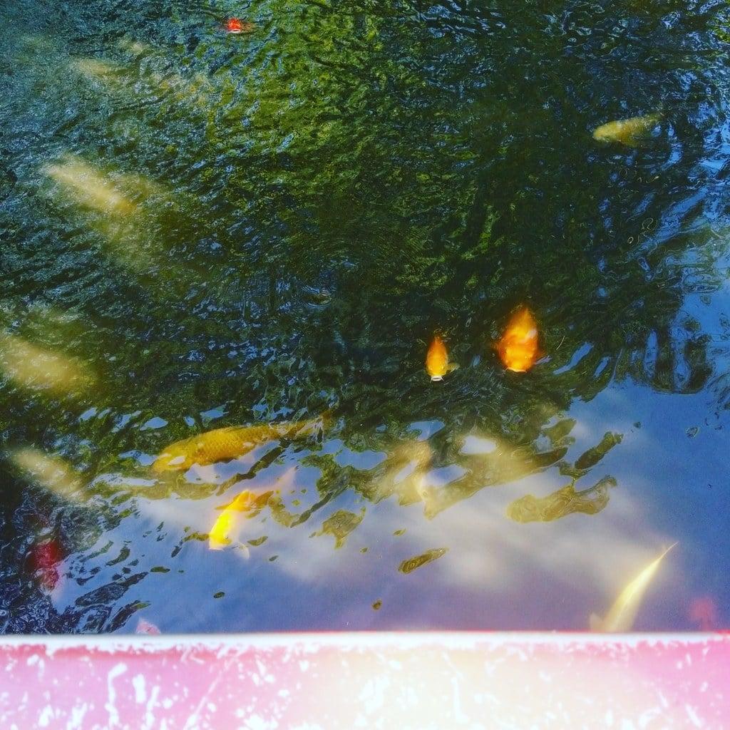 富岡八幡宮の庭園