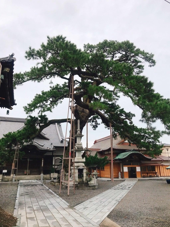 大慶寺の自然