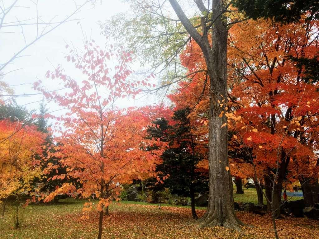 北海道護国神社の自然