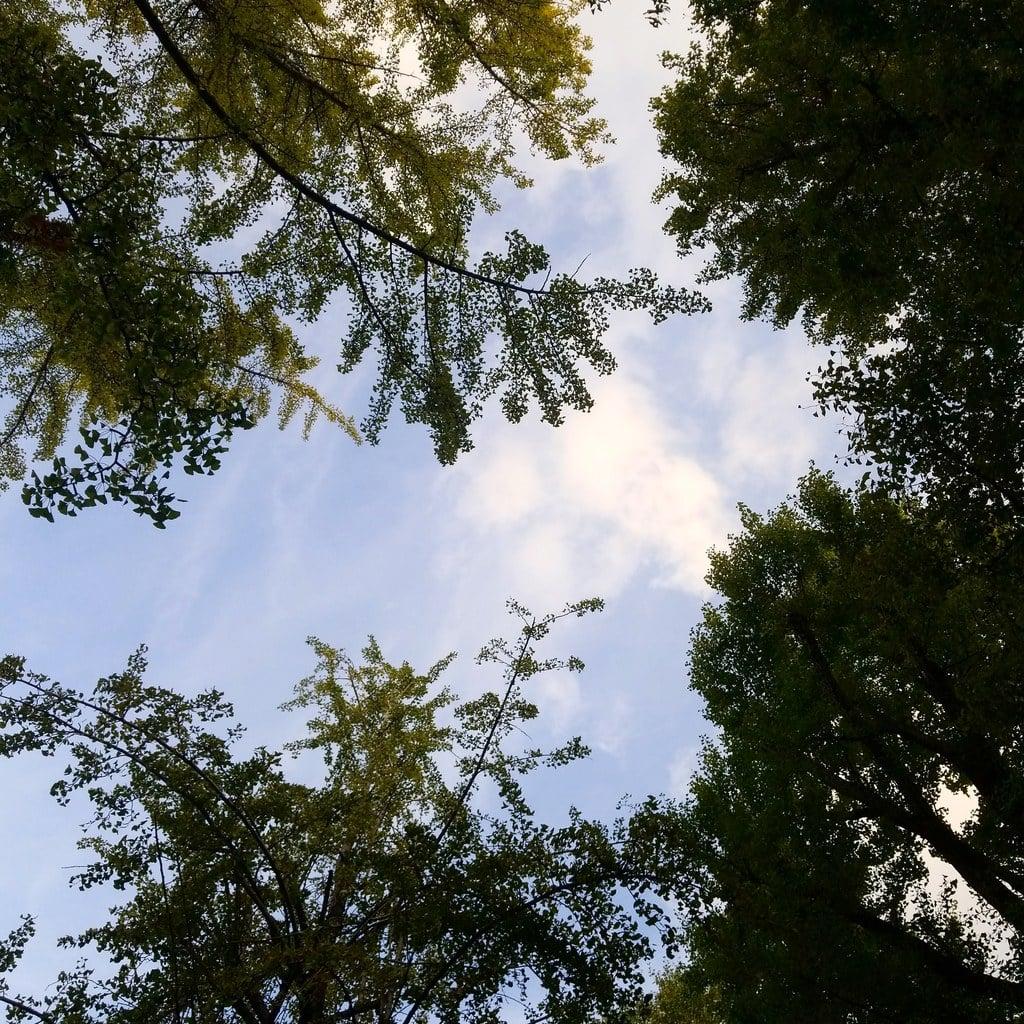 鳥越神社の自然