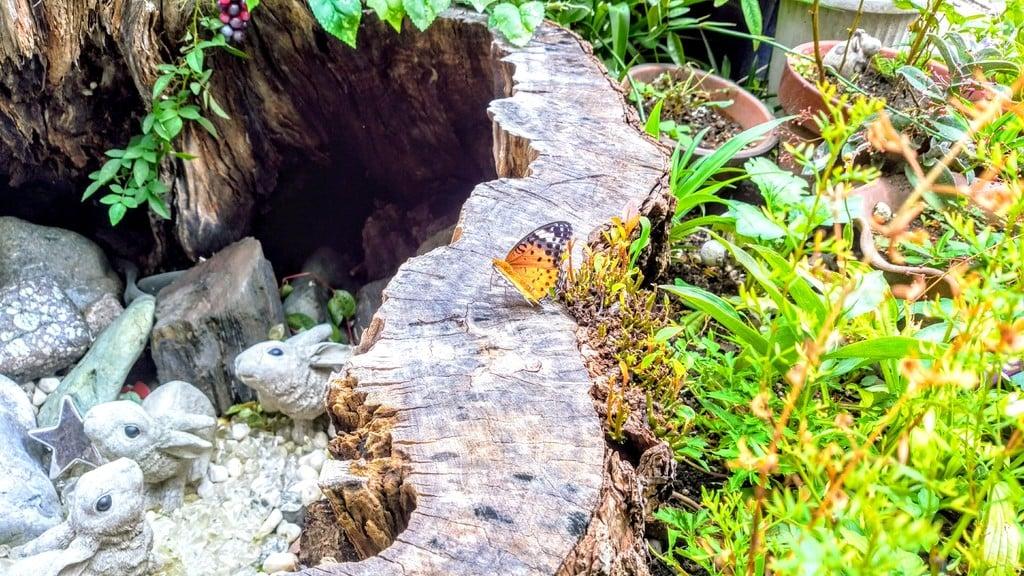 三輪神社の動物