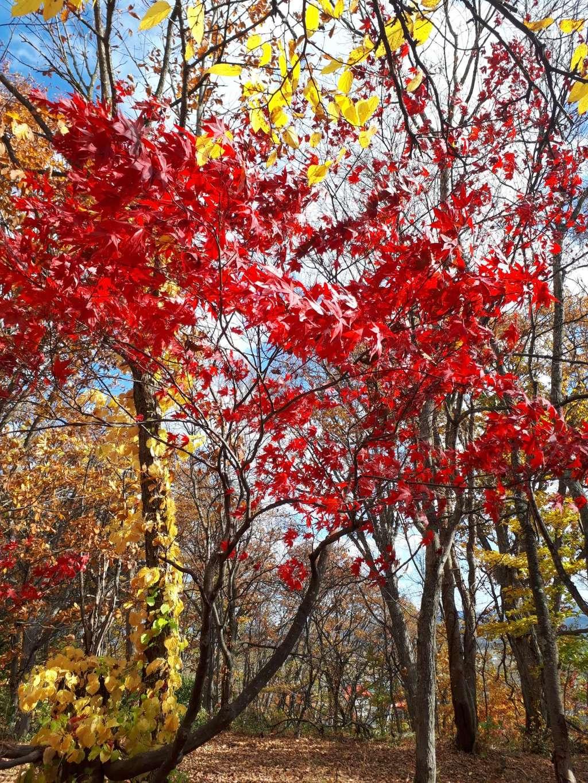 浦臼神社の自然