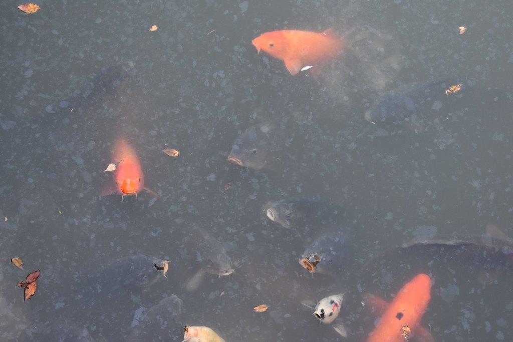 武田神社の動物