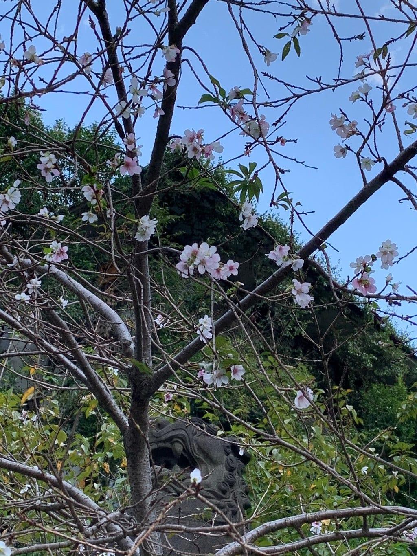 日枝神社の自然