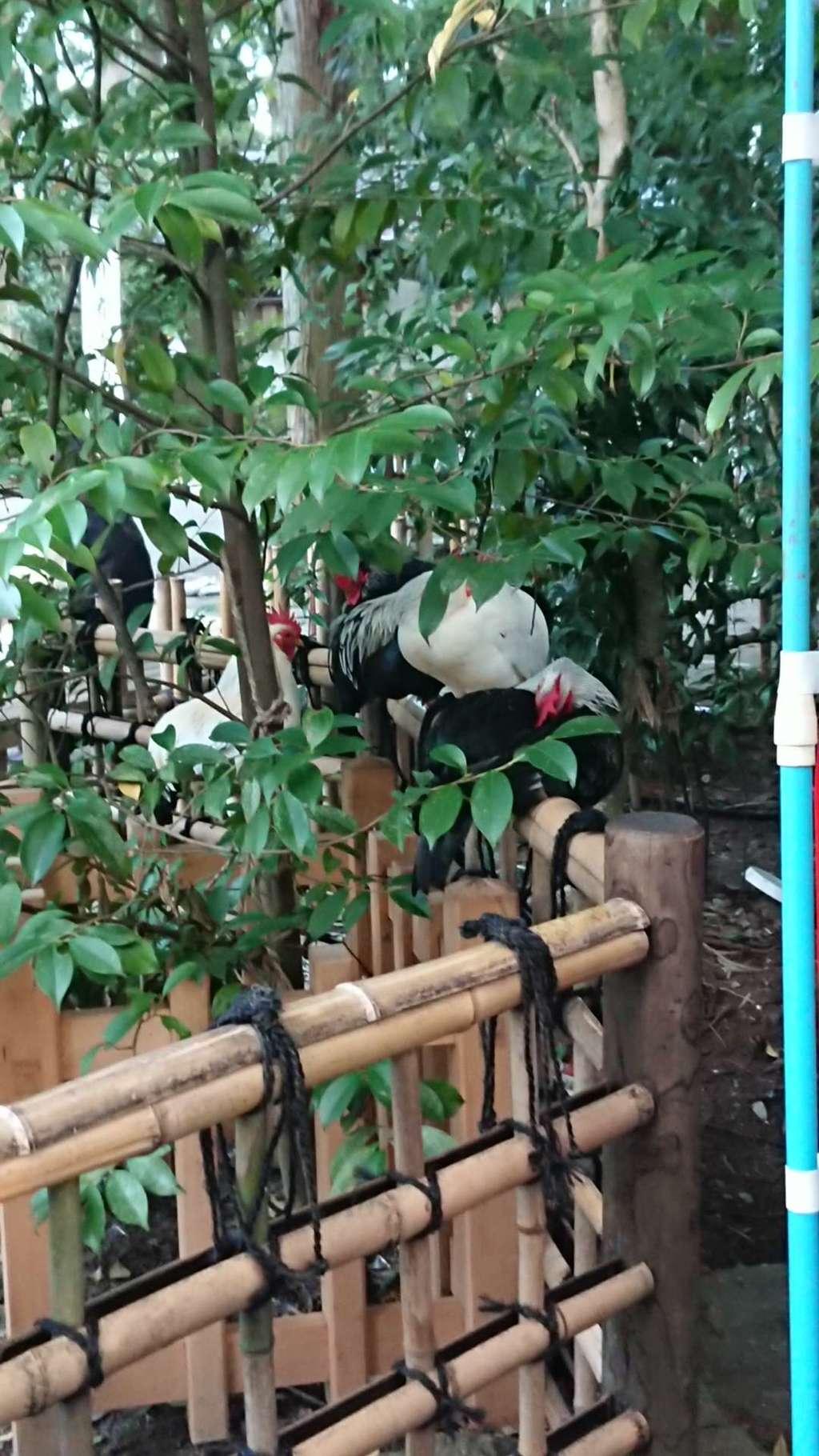 大崎八幡宮の動物