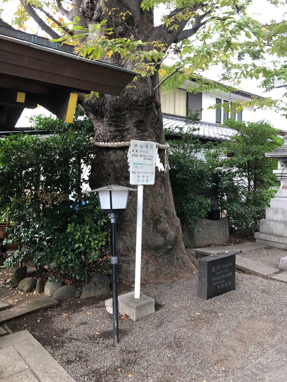 前川神社の自然