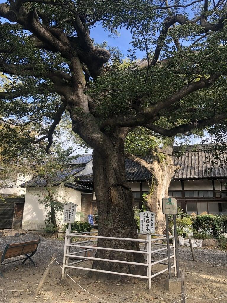 生根神社の自然