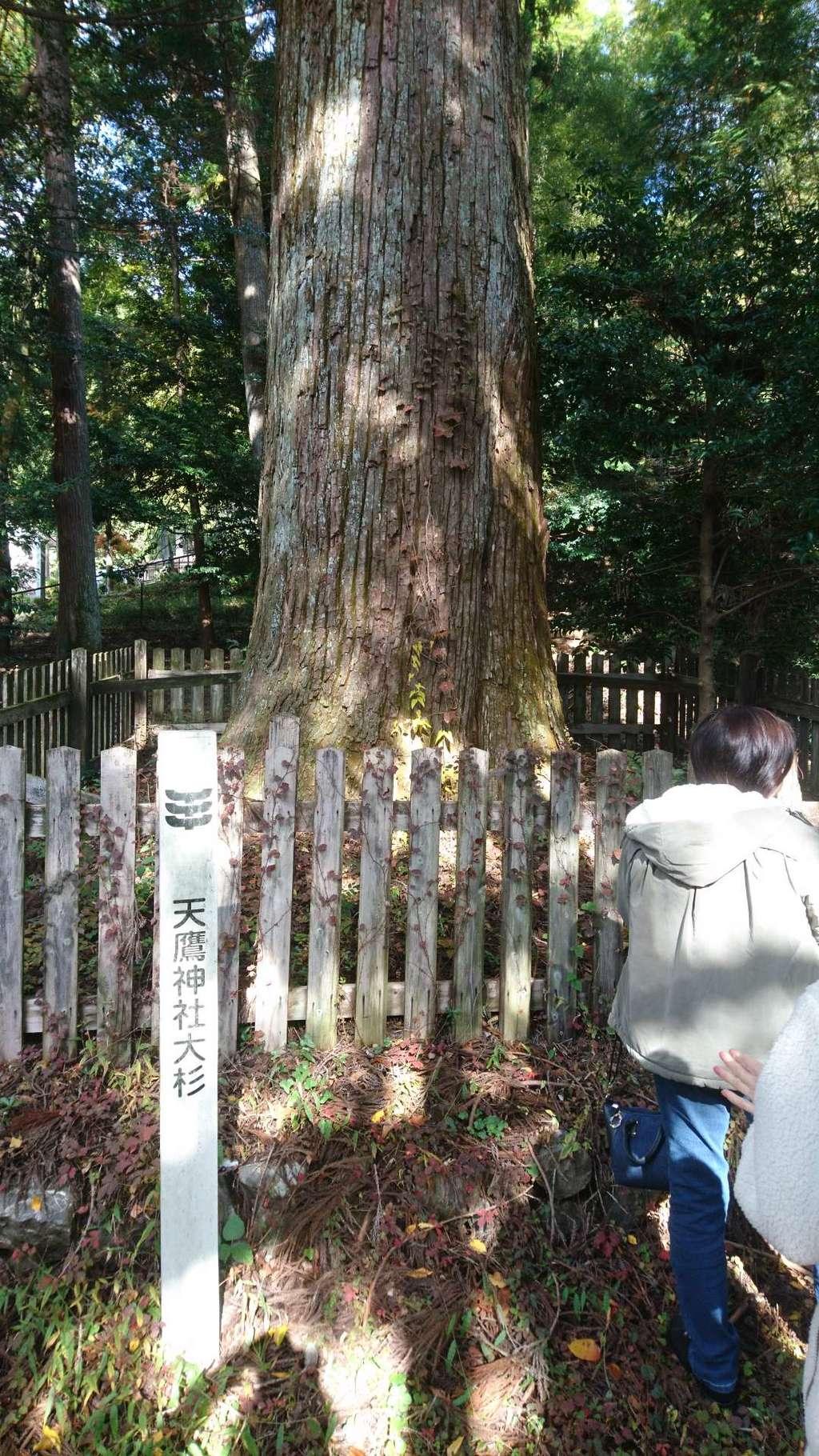 天鷹神社の自然