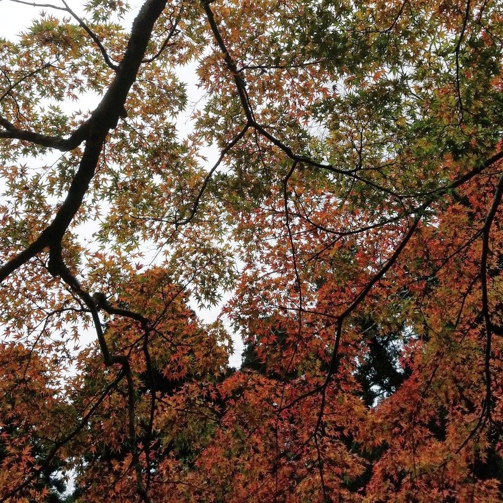 鹿島神宮の自然