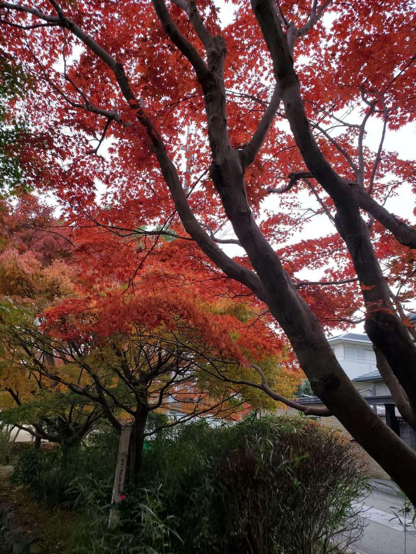 宇治上神社の自然