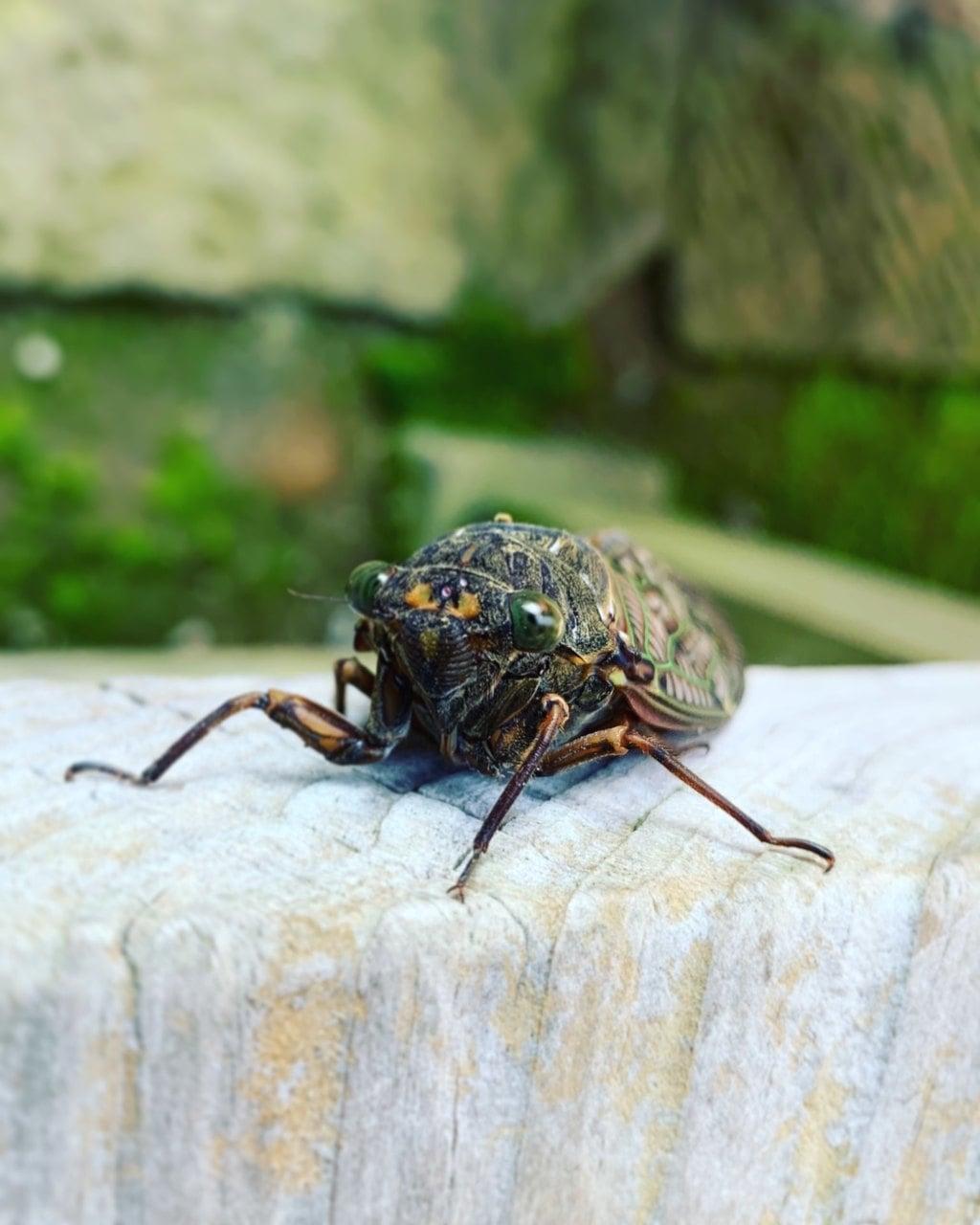滑川神社 - 仕事と子どもの守り神の動物