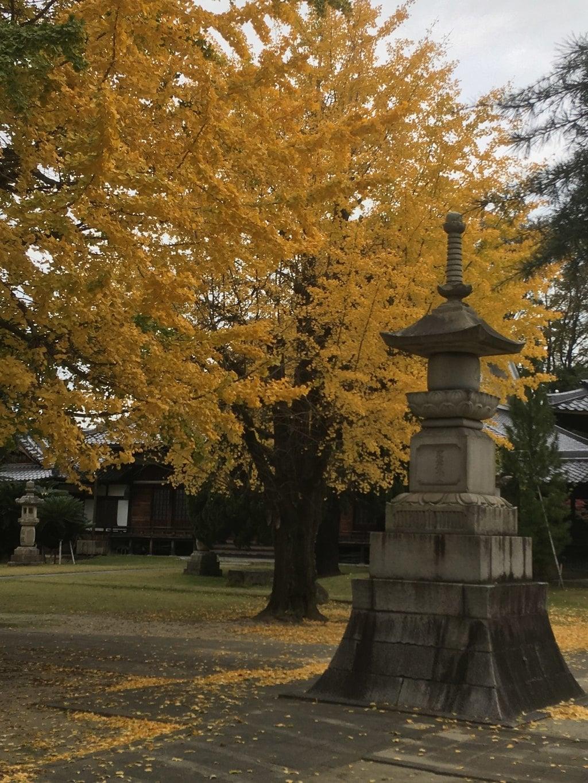 地蔵寺の自然
