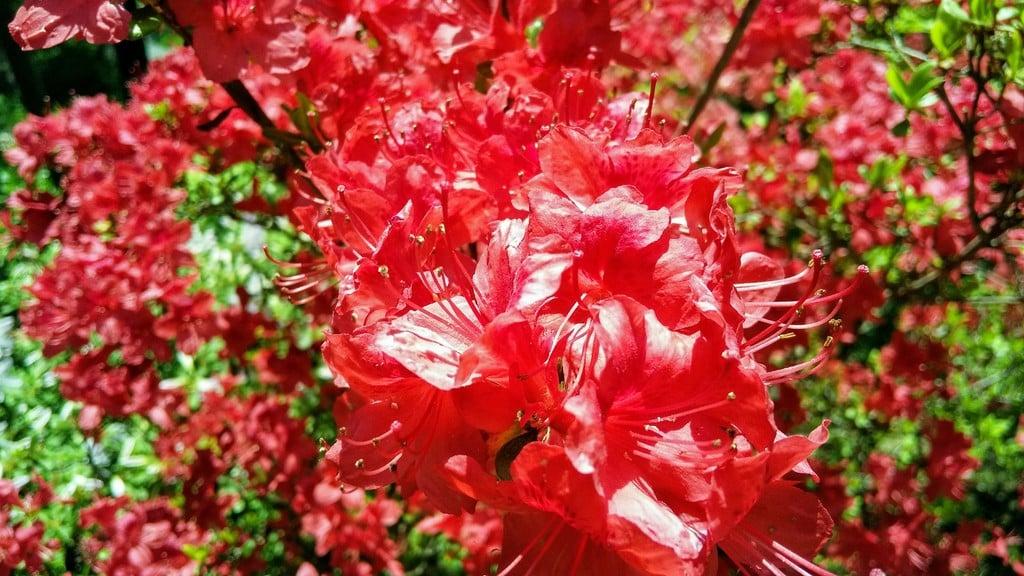本輪西八幡神社の自然