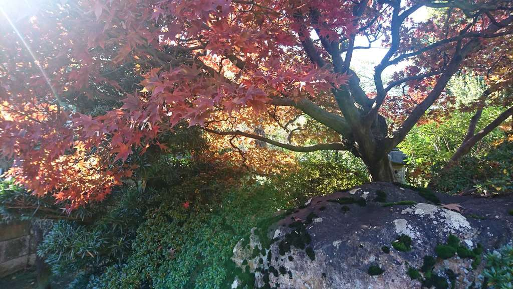 法照寺の自然