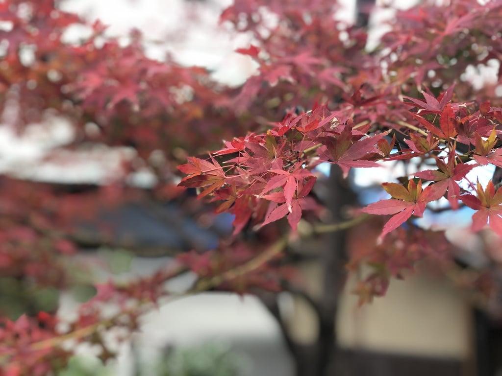 開口神社の自然
