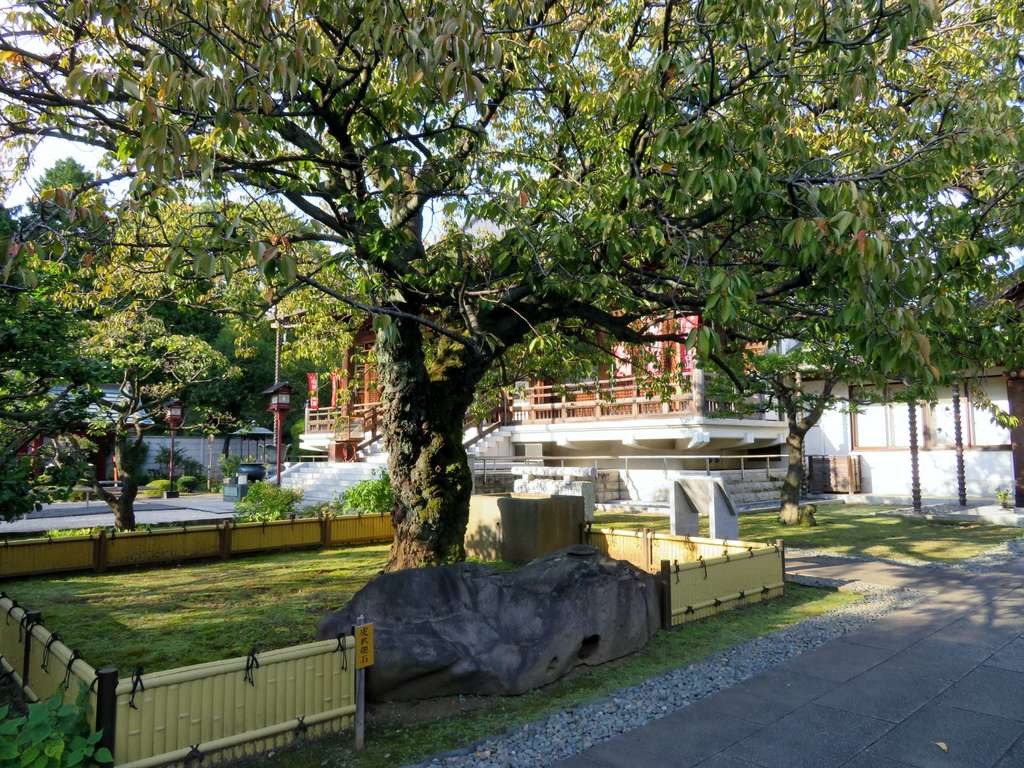 輪王寺の自然