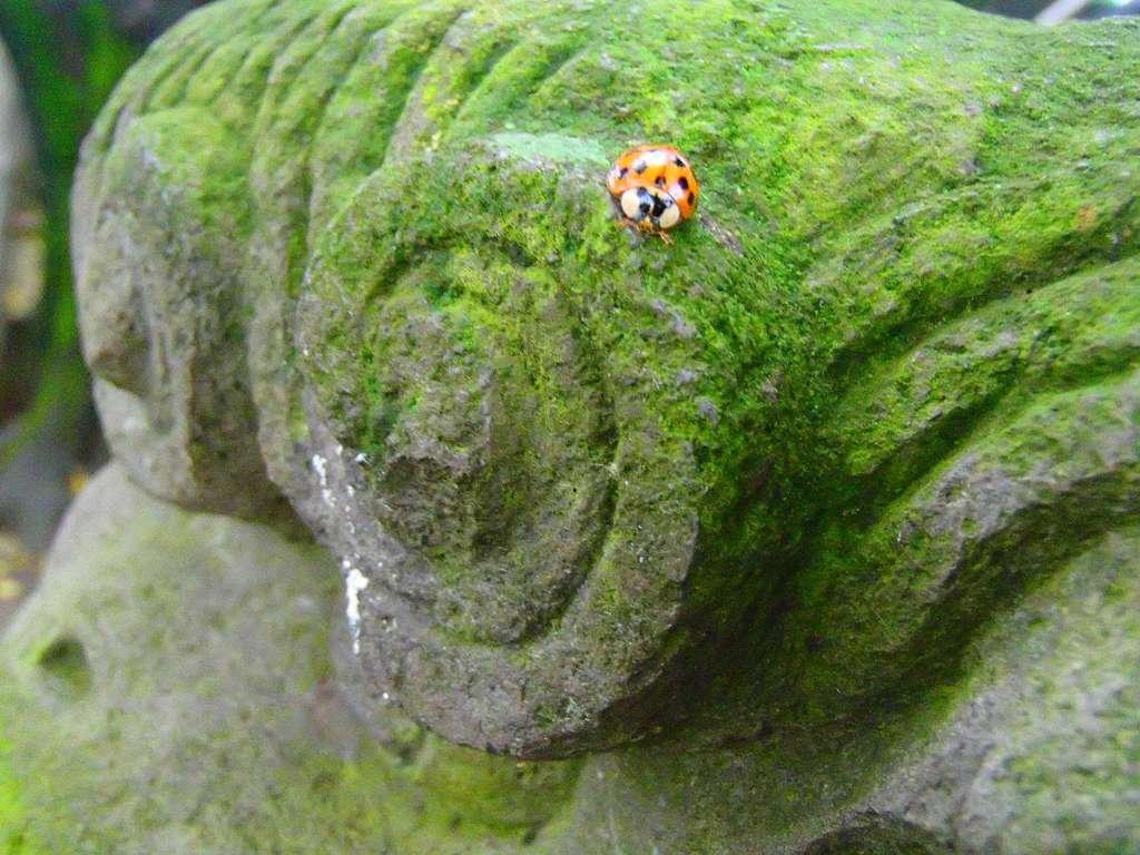 愛宕神社の動物