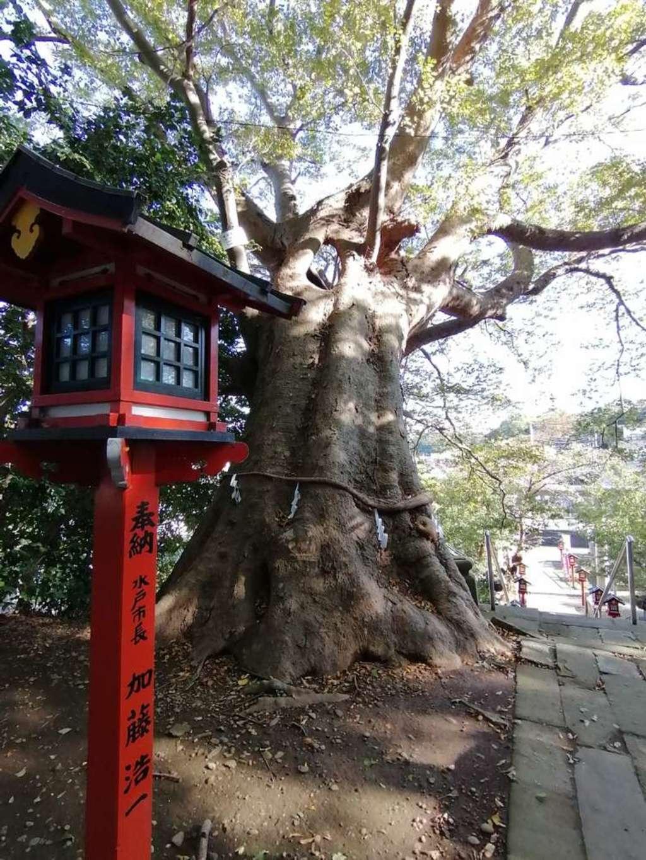 常陸第三宮 吉田神社の自然