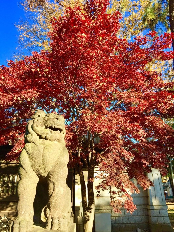 妙法寺の狛犬