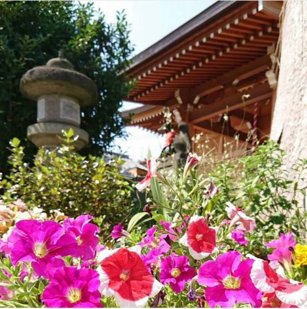 於菊稲荷神社の自然