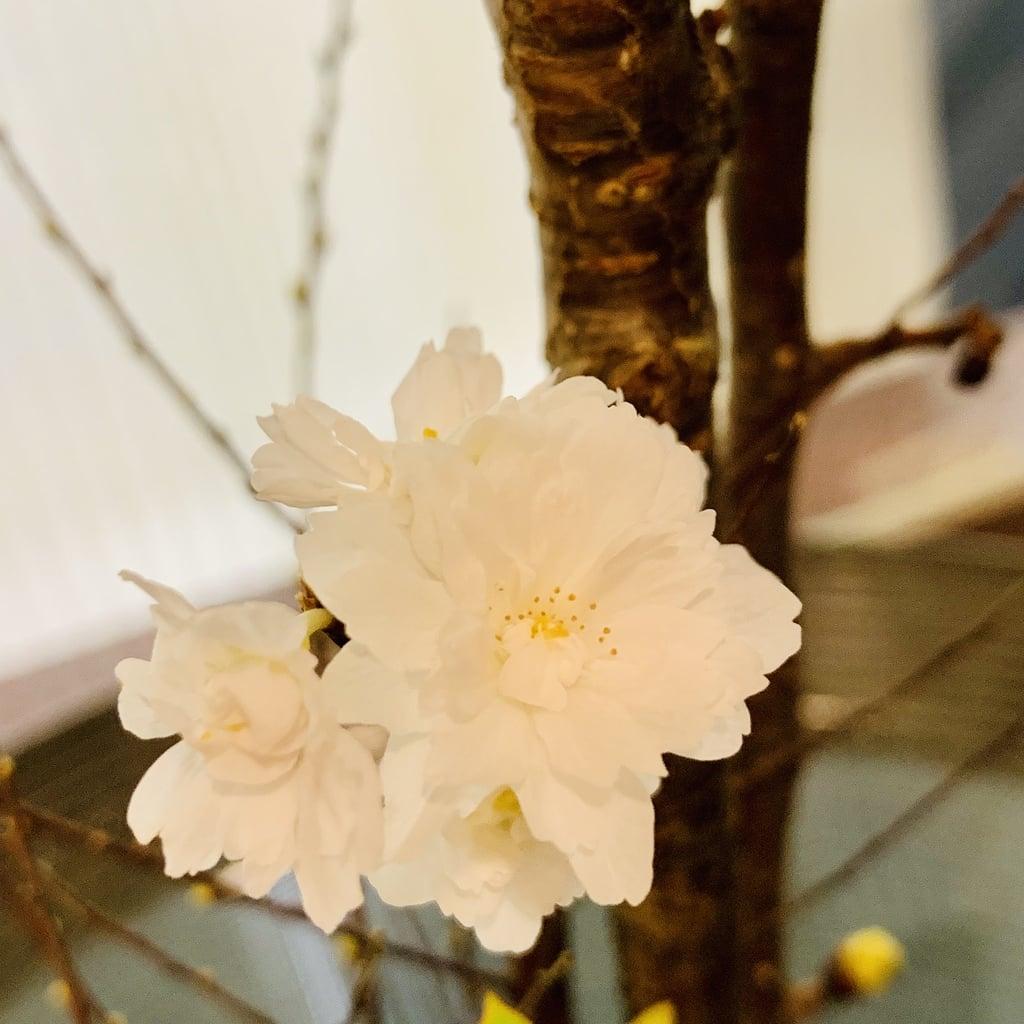 祇園堂の自然