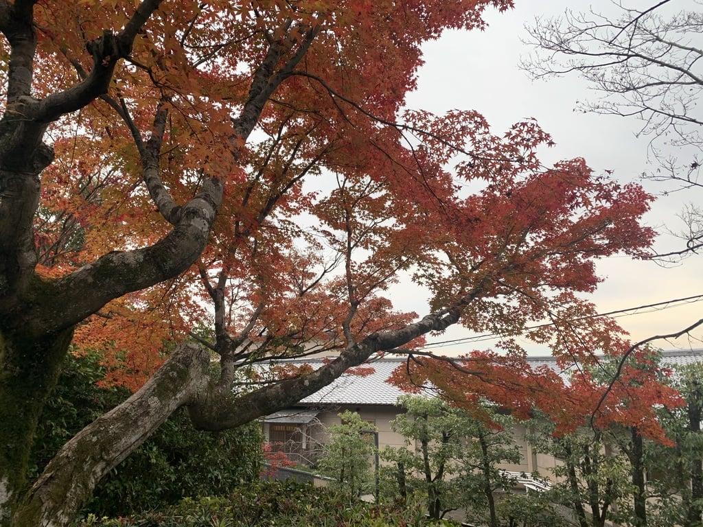 法蔵寺の自然