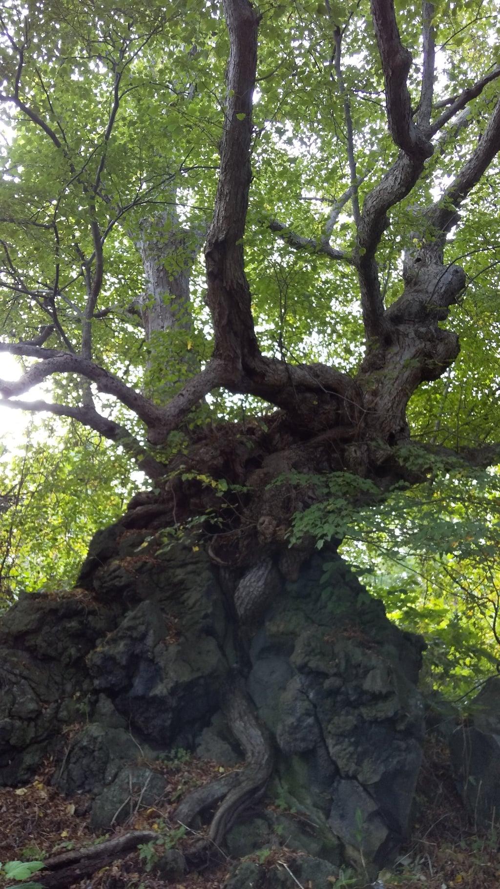 大臼山神社の自然