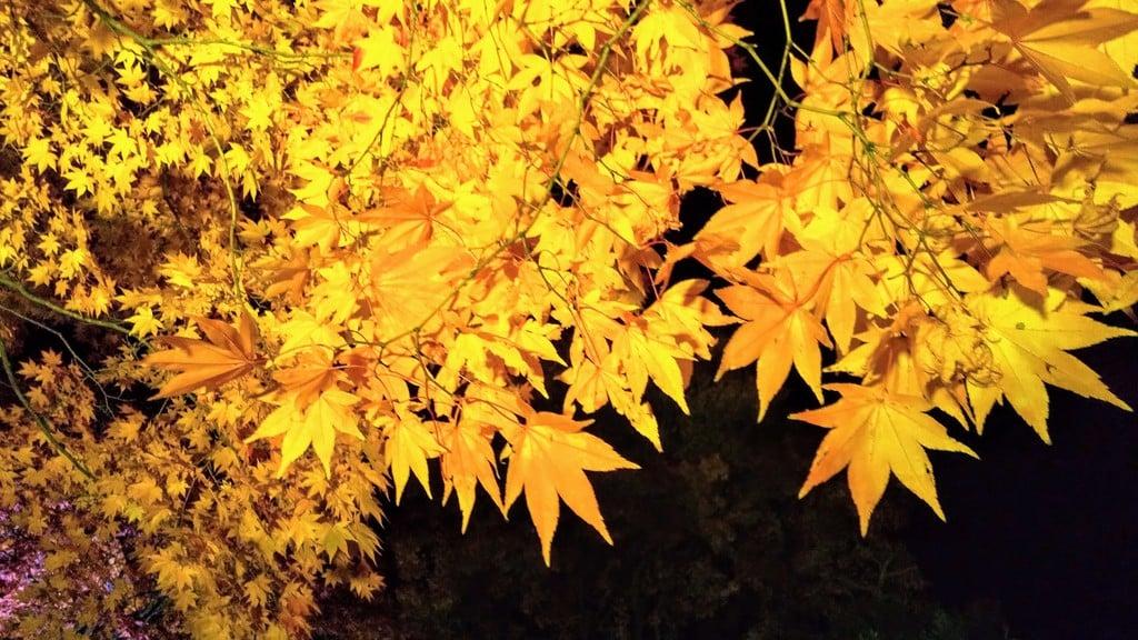 廣島神社の自然