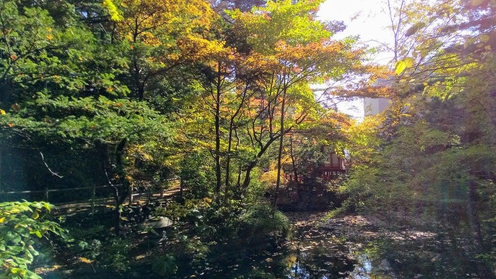 白石神社の自然