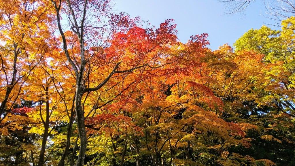 開拓神社の自然