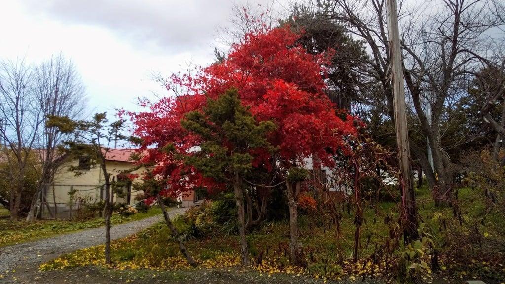 江部乙神社の自然